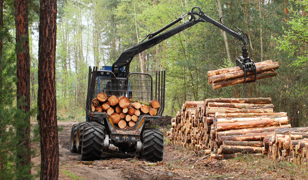 sh_forest_work_wood_